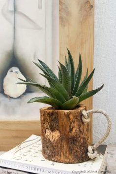 Branch Mug Planter – Eco-Friendly DIY