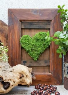 How to Revive Moss For Craft Projects