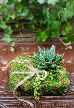 Nature Inspired Recycled Succulent Gift Box Planter