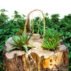 Tree Stump Succulent Planter and Fairy Swing DIY
